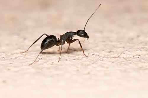 Ant Exterminators