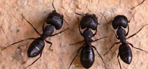 Ant Prevention