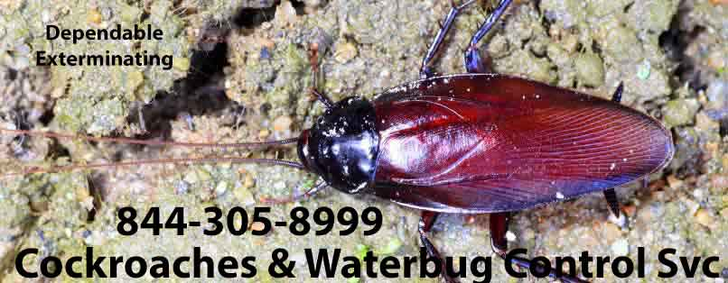 Cockroach Exterminators
