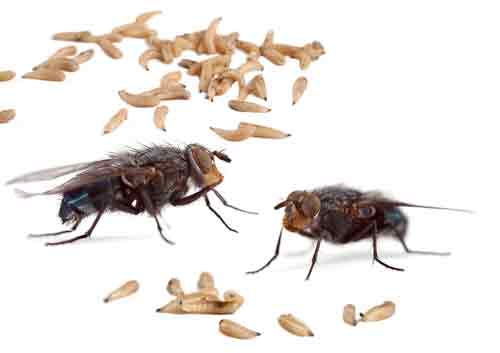 House Fly Exterminator