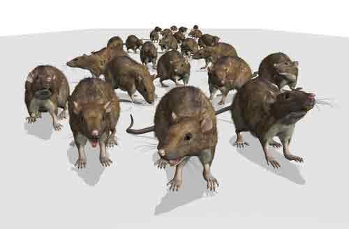 Rodent Abatement Program