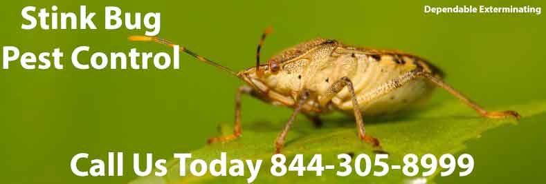 Stink Bug Exterminators