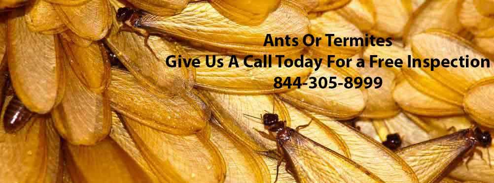Ants Or Termites