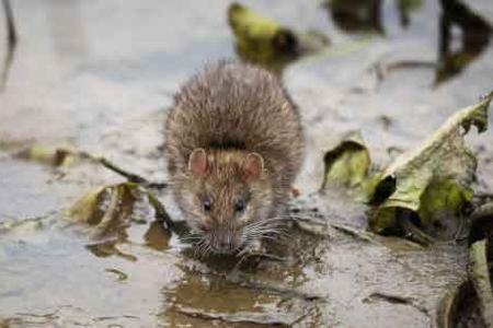 Bronx Rodent Control
