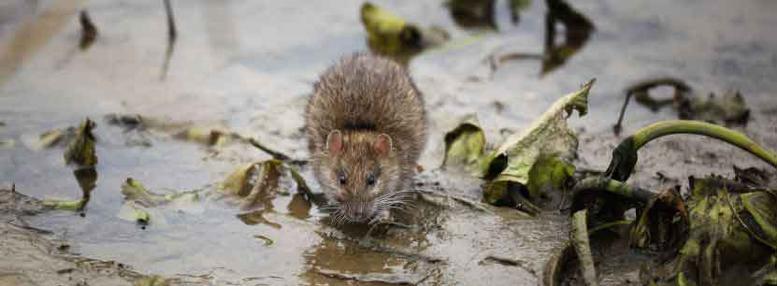 Congers Mice Exterminator