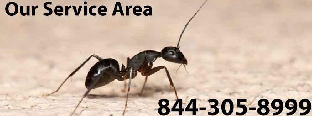 Pest Control Bronx NY