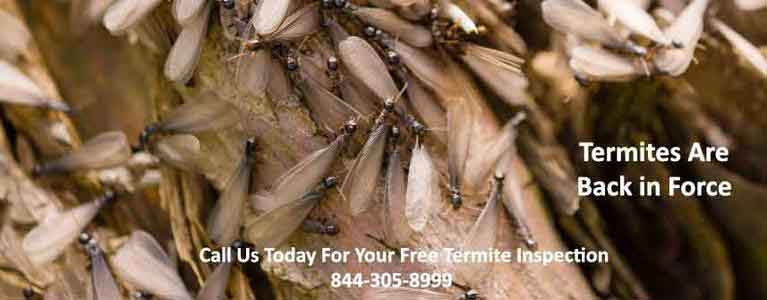Stony Point Termite Inspection