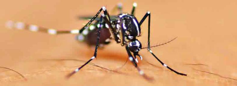 Suffern Mosquito Exterminator