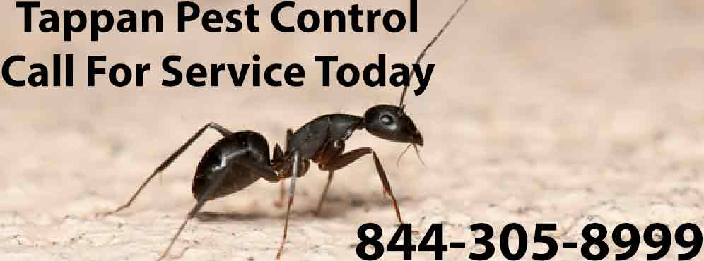 Tappan Pest Control
