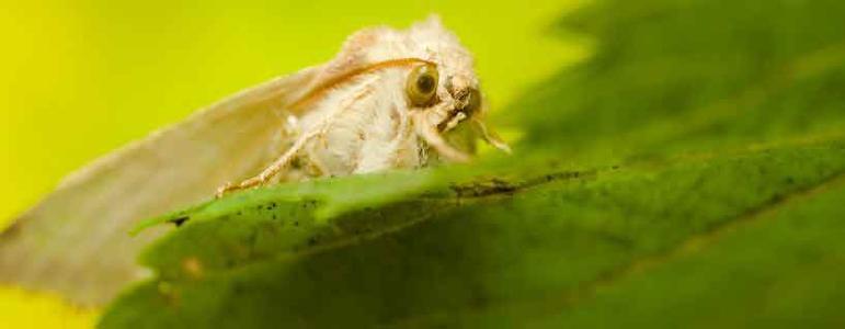 Tappan Moth Exterminator