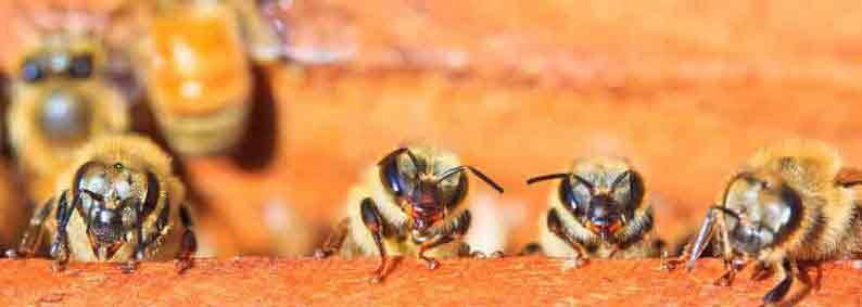 Thiells Bee Exterminator