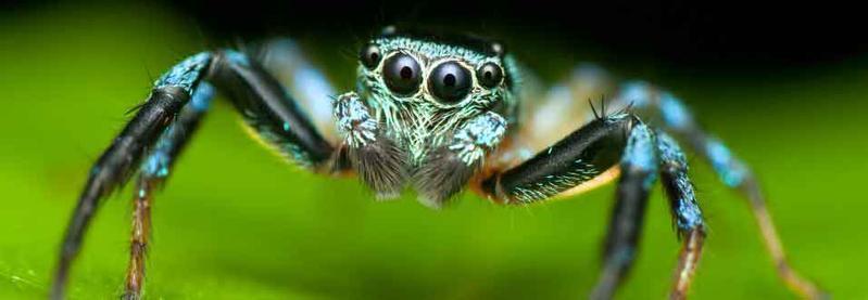 Thiells Spider Exterminator
