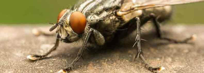 Thiells Fly Exterminator