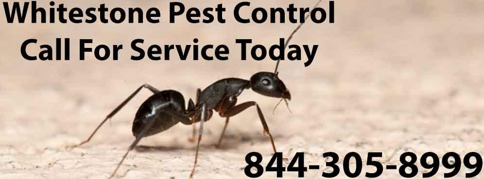 Whitestone Pest Control