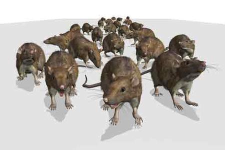 Whitestone Rodent Control