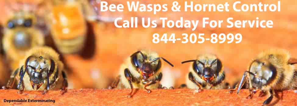 Bee's Wasps Hornets
