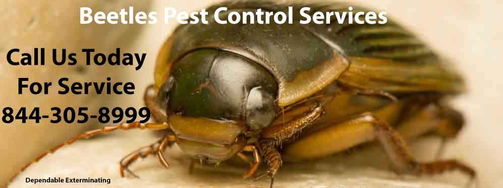 Carpet Beetle Treatment