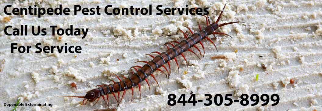 Centipede Exterminator