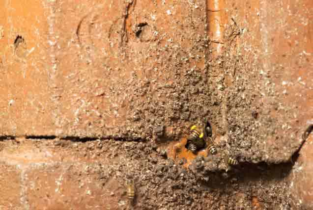 Bee Hive Inside Of Wall