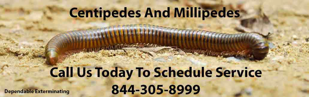 Centipede Pest Control