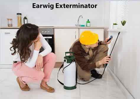 Earwig Exterminator