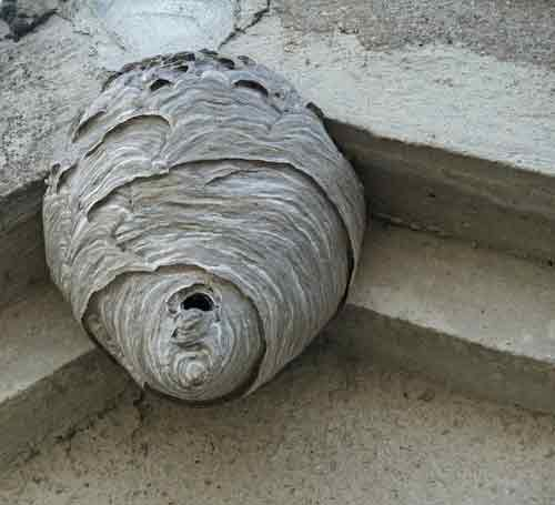 Hornet Hive