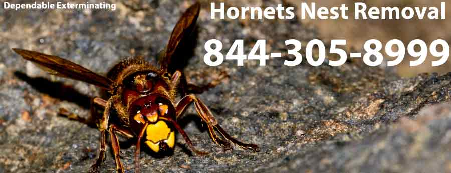 Hornets Nest Removal