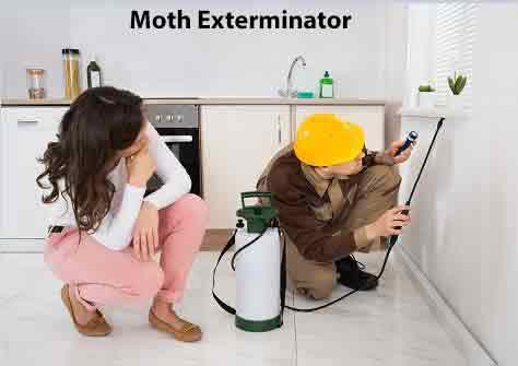 Moth Exterminator