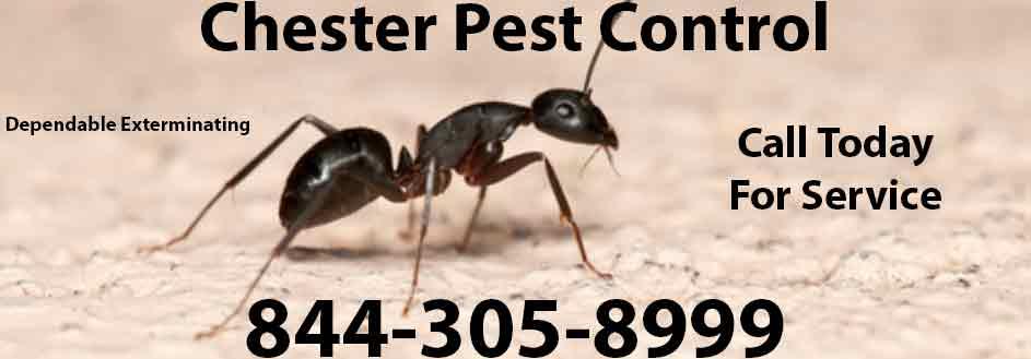 Chester Pest Control