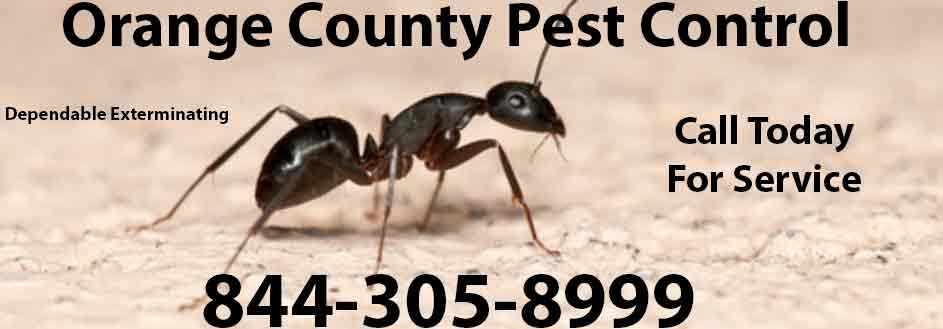 Orange County Pest Control