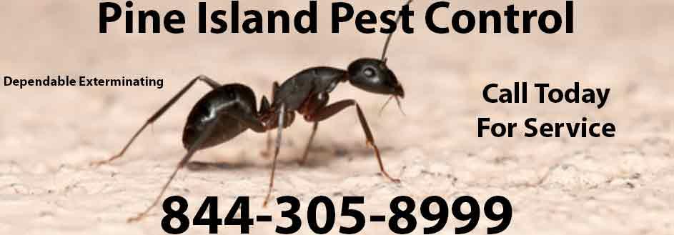 Pine Island Pest Control