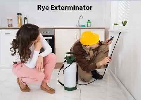 Rye Exterminator