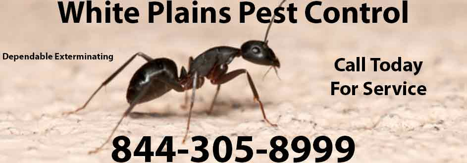 White Plains Pest Control