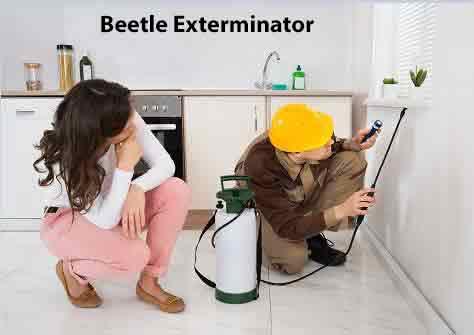 Carpet Beetle Exterminator